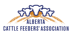 Alberta's voice for the cattle feeders industry