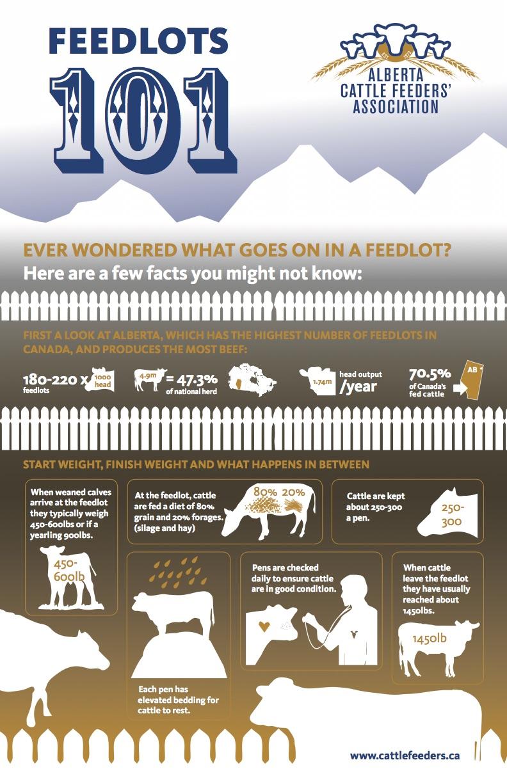 Feedlots 101 infographic
