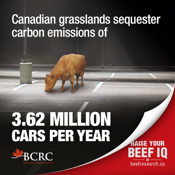 grasslands sequestering carbon