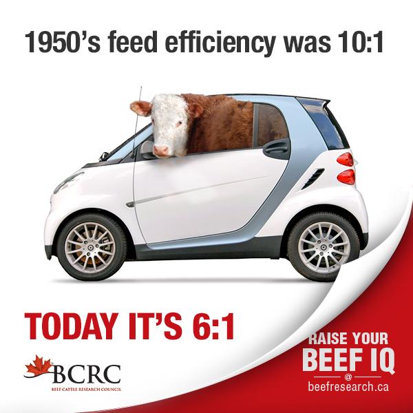 cattle feed efficiency
