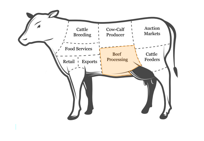 the 7 stages of beef cattle production