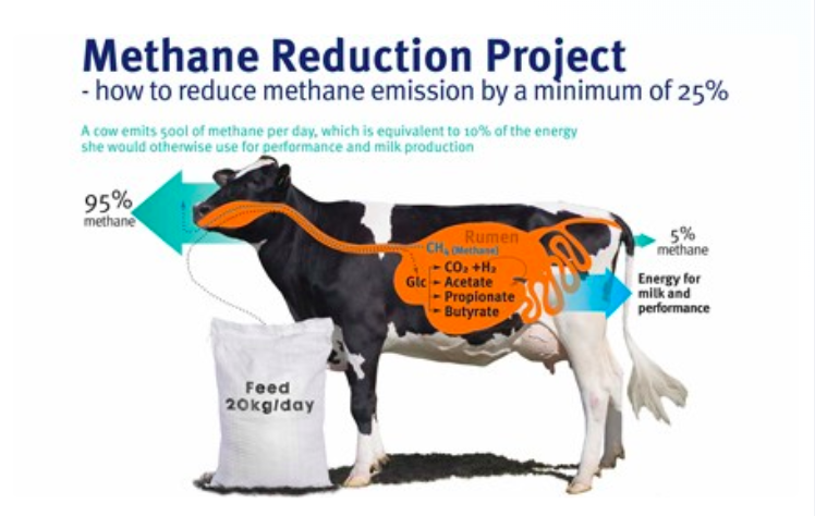 feed into milk a new applied feeding system for dairy cows